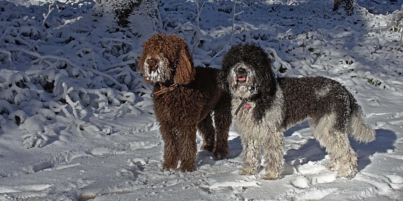 unsere-hunde